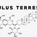How Does Tribulus Increase Testosterone, If at All?