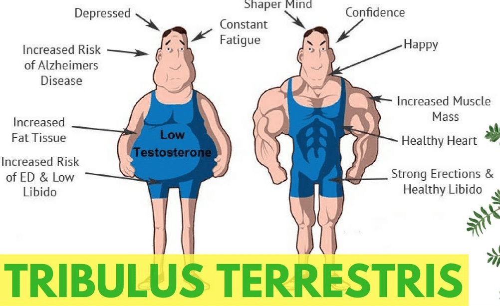 tribulus for testosterone boost